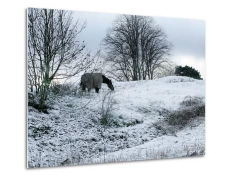Horse Grazes on a Snow Covered Field in Bearsted in Kent, England--Metal Print