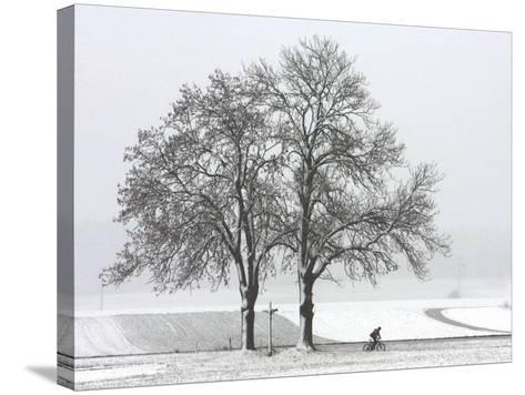 Cyclist Passes a Tree Covered with Snow, Southern Germany--Stretched Canvas Print