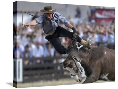Gaucho, or Cowboy, is Thrown from a Horse as He Competes in a Rodeo in Montevideo--Stretched Canvas Print