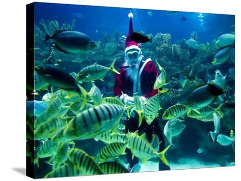 Diver Dressed as Santa Claus Feeds Fish as Part of Christmas Celebrations, Aquarium in Kuala Lumpur--Stretched Canvas Print