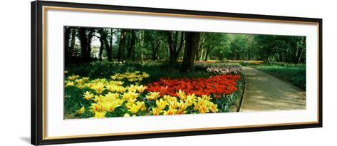 Tulips in a Garden, Springfields Garden, Lincolnshire, England--Framed Art Print