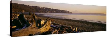 Driftwood on the Beach, Discovery Park, Mt Rainier, Seattle, King County, Washington State, USA--Stretched Canvas Print