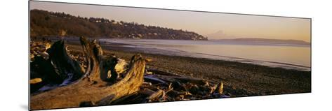 Driftwood on the Beach, Discovery Park, Mt Rainier, Seattle, King County, Washington State, USA--Mounted Photographic Print