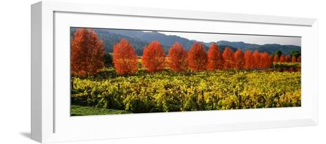 Crop in a Vineyard, Napa Valley, California, USA--Framed Art Print