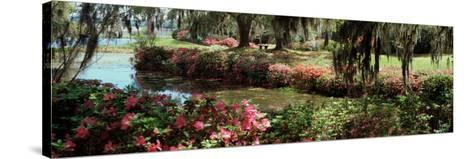 Azaleas and Willow Trees in a Park, Charleston, Charleston County, South Carolina, USA--Stretched Canvas Print