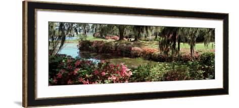 Azaleas and Willow Trees in a Park, Charleston, Charleston County, South Carolina, USA--Framed Art Print