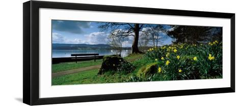 Daffodils at the Lakeside, Lake Windermere, English Lake District, Cumbria, England--Framed Art Print