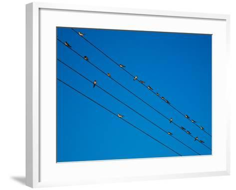 Swallows in Autumn Prior to Migration, Fethard, County Tipperary, Ireland--Framed Art Print