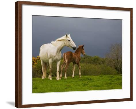 Mare and Foal, Co Derry, Ireland--Framed Art Print