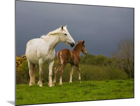 Mare and Foal, Co Derry, Ireland--Mounted Photographic Print