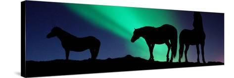 Silhouette of Horses at Dusk, Iceland--Stretched Canvas Print
