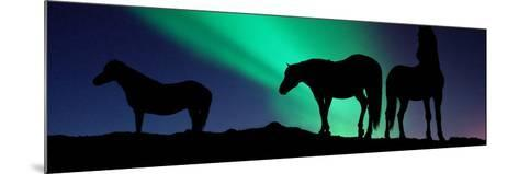 Silhouette of Horses at Dusk, Iceland--Mounted Photographic Print