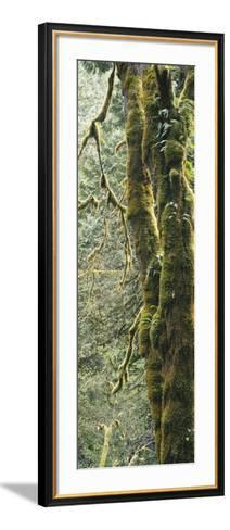 Mossy Tree Trunk, Olympic National Forest, Olympic National Park, Washington, USA-Paul Souders-Framed Art Print