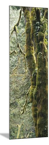 Mossy Tree Trunk, Olympic National Forest, Olympic National Park, Washington, USA-Paul Souders-Mounted Photographic Print