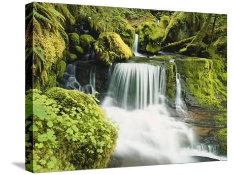 Waterfall in Willamette National Forest, Oregon, USA-Stuart Westmoreland-Stretched Canvas Print