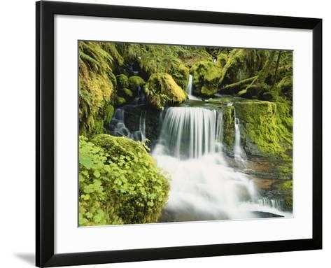 Waterfall in Willamette National Forest, Oregon, USA-Stuart Westmoreland-Framed Art Print