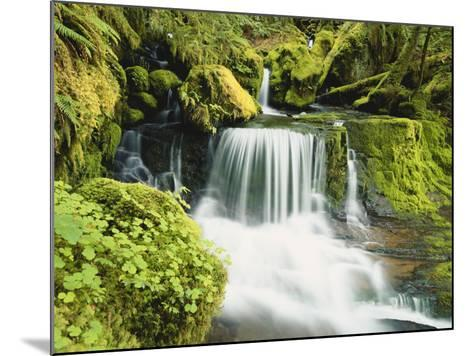 Waterfall in Willamette National Forest, Oregon, USA-Stuart Westmoreland-Mounted Photographic Print