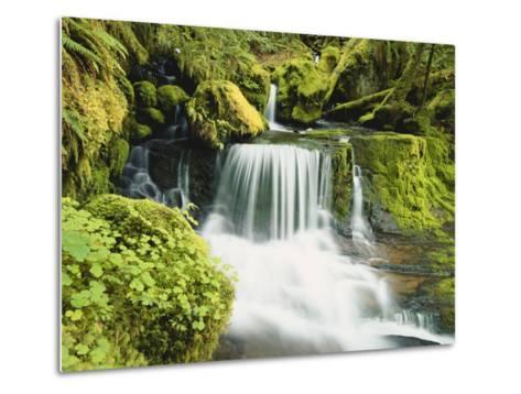 Waterfall in Willamette National Forest, Oregon, USA-Stuart Westmoreland-Metal Print