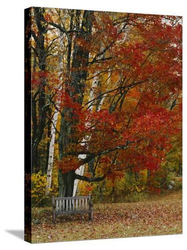 Empty Bench under Maple Tree, Twin Ponds Farm, West River Valley, Vermont, USA-Scott T^ Smith-Stretched Canvas Print
