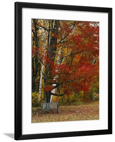 Empty Bench under Maple Tree, Twin Ponds Farm, West River Valley, Vermont, USA-Scott T^ Smith-Framed Art Print