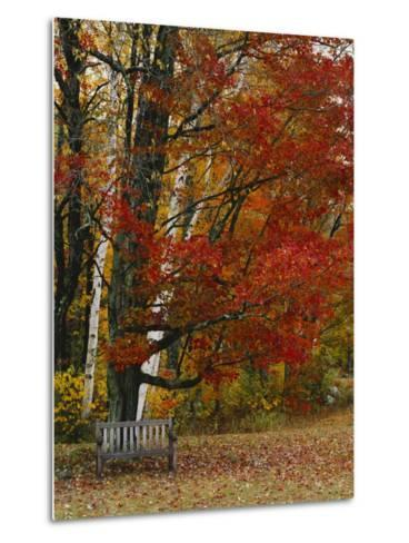 Empty Bench under Maple Tree, Twin Ponds Farm, West River Valley, Vermont, USA-Scott T^ Smith-Metal Print