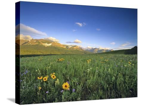 Wildflowers Along Rocky Mountain Front Near Browning, Montana, USA-Chuck Haney-Stretched Canvas Print