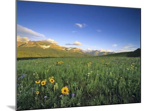 Wildflowers Along Rocky Mountain Front Near Browning, Montana, USA-Chuck Haney-Mounted Photographic Print