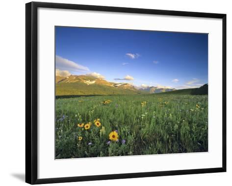 Wildflowers Along Rocky Mountain Front Near Browning, Montana, USA-Chuck Haney-Framed Art Print