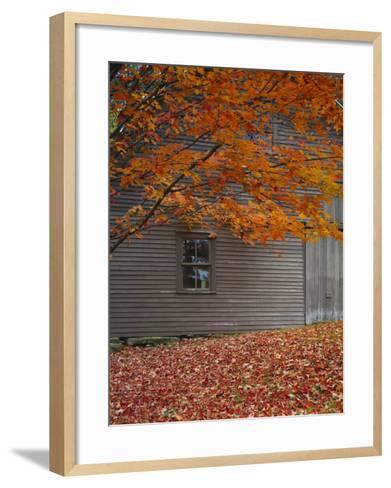 Barn and Maple Tree in Autumn, Vermont, USA-Scott T^ Smith-Framed Art Print