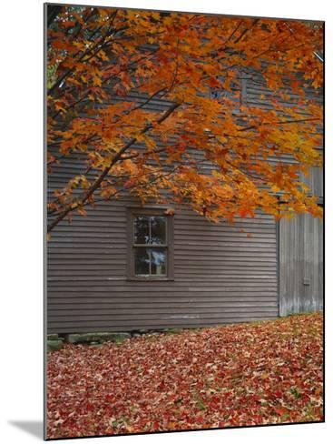 Barn and Maple Tree in Autumn, Vermont, USA-Scott T^ Smith-Mounted Photographic Print