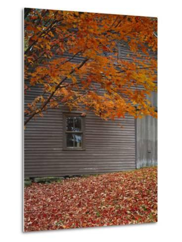 Barn and Maple Tree in Autumn, Vermont, USA-Scott T^ Smith-Metal Print