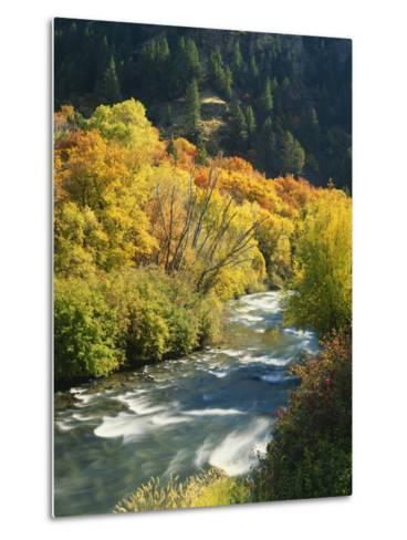 Maples and Birches Along Blacksmith Fork River, Wasatch-Cache National Forest, Utah, USA-Scott T^ Smith-Metal Print