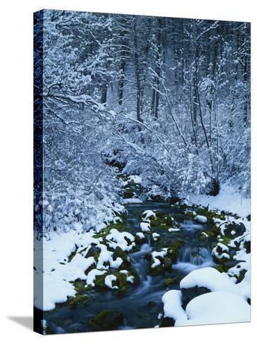 Spring-Fed Creek in Winter, Wasatch-Catch National Forest, Utah, USA-Scott T^ Smith-Stretched Canvas Print