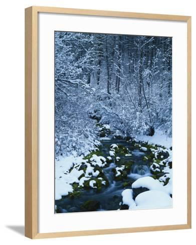 Spring-Fed Creek in Winter, Wasatch-Catch National Forest, Utah, USA-Scott T^ Smith-Framed Art Print