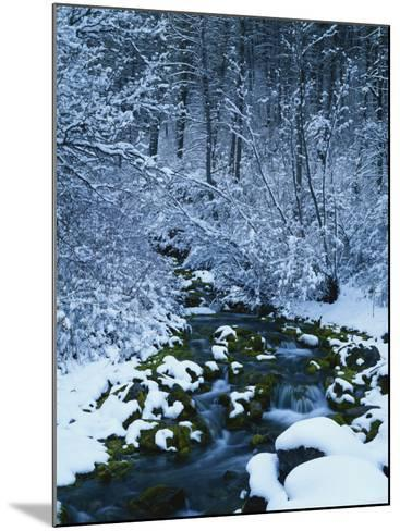 Spring-Fed Creek in Winter, Wasatch-Catch National Forest, Utah, USA-Scott T^ Smith-Mounted Photographic Print