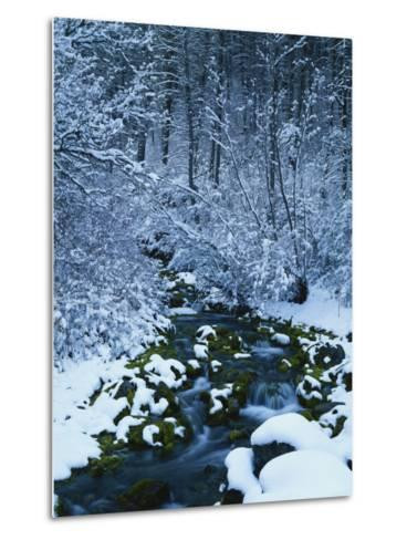 Spring-Fed Creek in Winter, Wasatch-Catch National Forest, Utah, USA-Scott T^ Smith-Metal Print