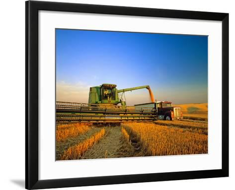 Farmer Unloading Wheat from Combine Near Colfax, Washington, USA-Chuck Haney-Framed Art Print