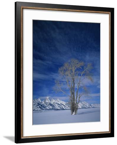 Bare Tree in Snowy Landscape, Grand Teton National Park, Wyoming, USA-Scott T^ Smith-Framed Art Print