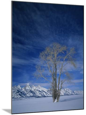 Bare Tree in Snowy Landscape, Grand Teton National Park, Wyoming, USA-Scott T^ Smith-Mounted Photographic Print
