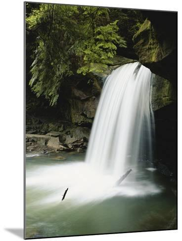 Dogslaughter Falls in Spring, Daniel Boone National Forest, Kentucky, USA-Adam Jones-Mounted Photographic Print