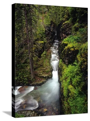 Sunrift Gorge on Baring Creek in Glacier National Park, Montana, USA-Chuck Haney-Stretched Canvas Print