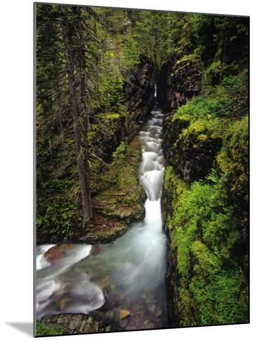 Sunrift Gorge on Baring Creek in Glacier National Park, Montana, USA-Chuck Haney-Mounted Photographic Print