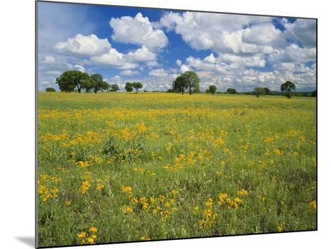 Field of Flowers and Trees with Cloudy Sky, Texas Hill Country, Texas, USA-Adam Jones-Mounted Photographic Print
