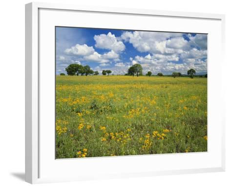 Field of Flowers and Trees with Cloudy Sky, Texas Hill Country, Texas, USA-Adam Jones-Framed Art Print