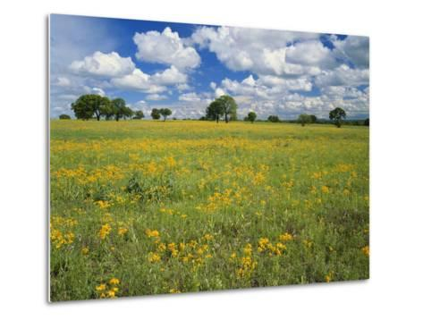 Field of Flowers and Trees with Cloudy Sky, Texas Hill Country, Texas, USA-Adam Jones-Metal Print
