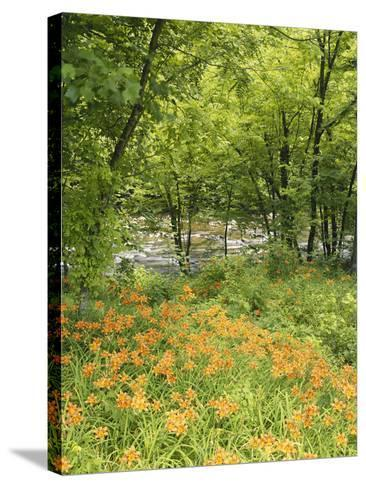 Day Lily Flowers Growing Along Little Pigeon River, Great Smoky Mountains National Park, Tennessee-Adam Jones-Stretched Canvas Print