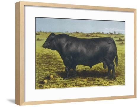 Aberdeen Angus Bull 'Cash'--Framed Art Print
