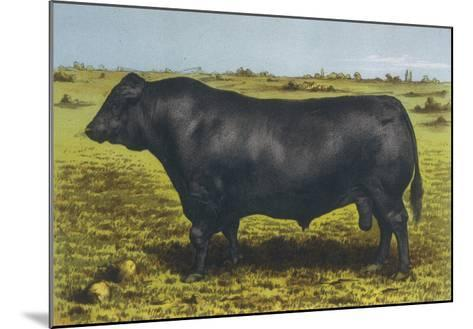 Aberdeen Angus Bull 'Cash'--Mounted Giclee Print