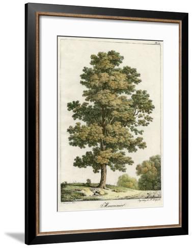 A Sweet Chestnut Tree--Framed Art Print