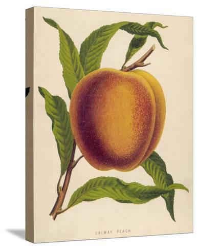 A Salway Peach--Stretched Canvas Print
